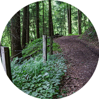 2017-09-02_dv_florestas
